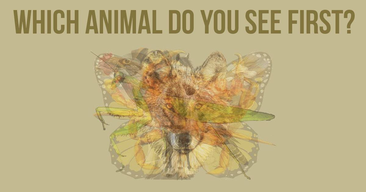 The First Animal You See Reveals Your Personality