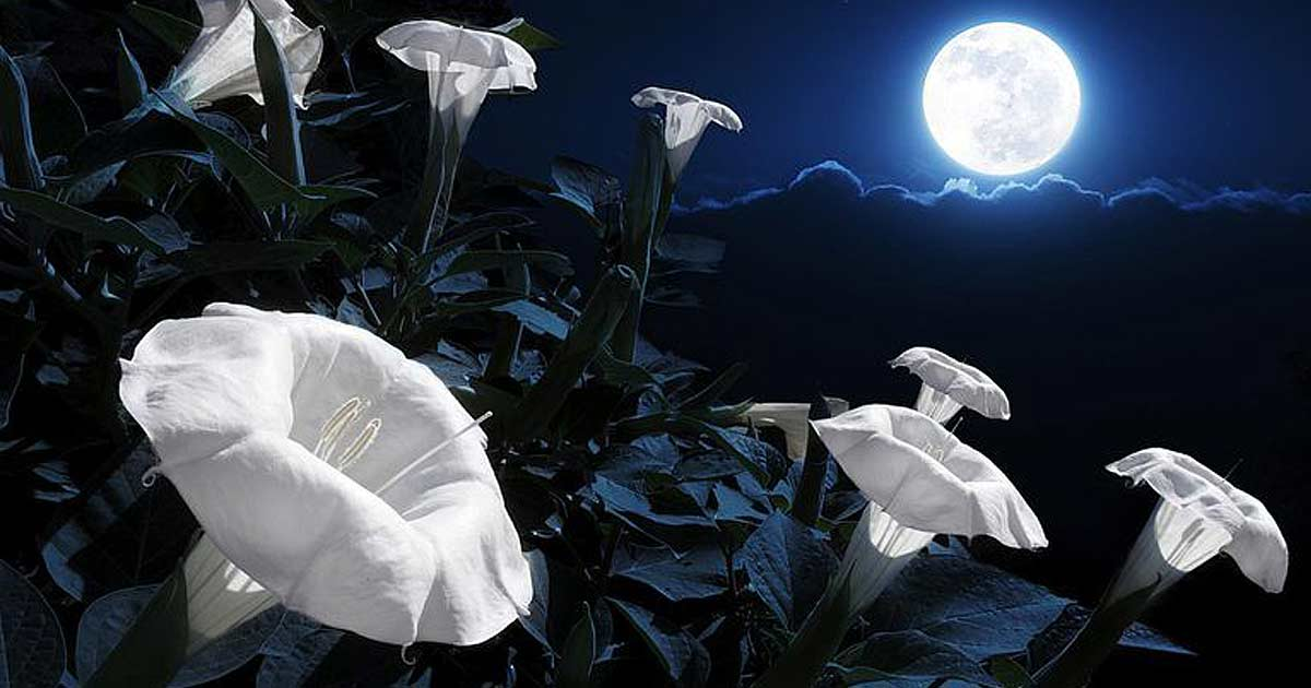 Are You a Night Owl? Here is How You Can Build Your Own Miraculous Moon Garden!