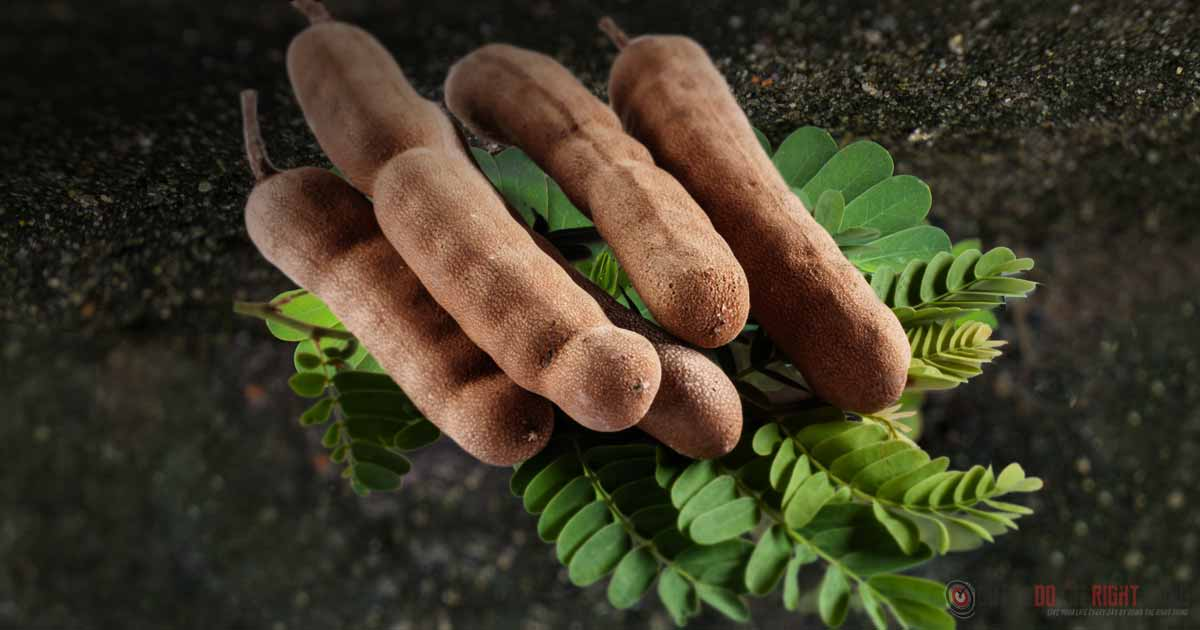 Tamarind Detox Clear Your MIND and Pineal Gland from Fluoride