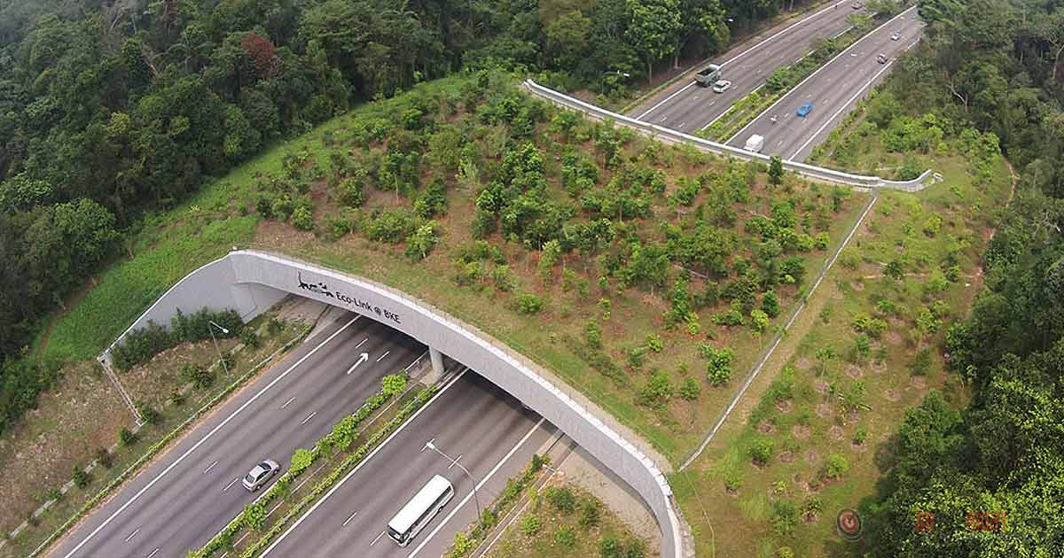 These Incredible Bridges Save Thousands Of Animals Every Year!