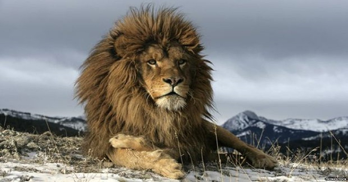 10 Daily Rituals You Should Practice If You Want To Be A Lion In A World Full Of Sheep