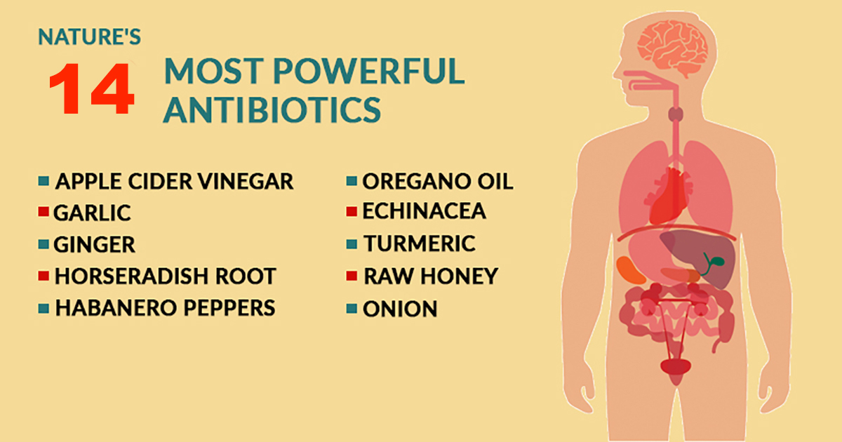 14 Natural & Powerful Antibiotics You Can Use To Treat Infections