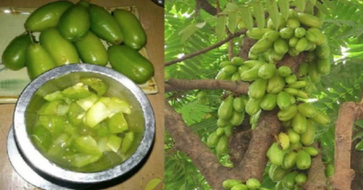 A Wonder Fruit: 9 Health Benefits of Kamias (No.8 Will Surprise You)