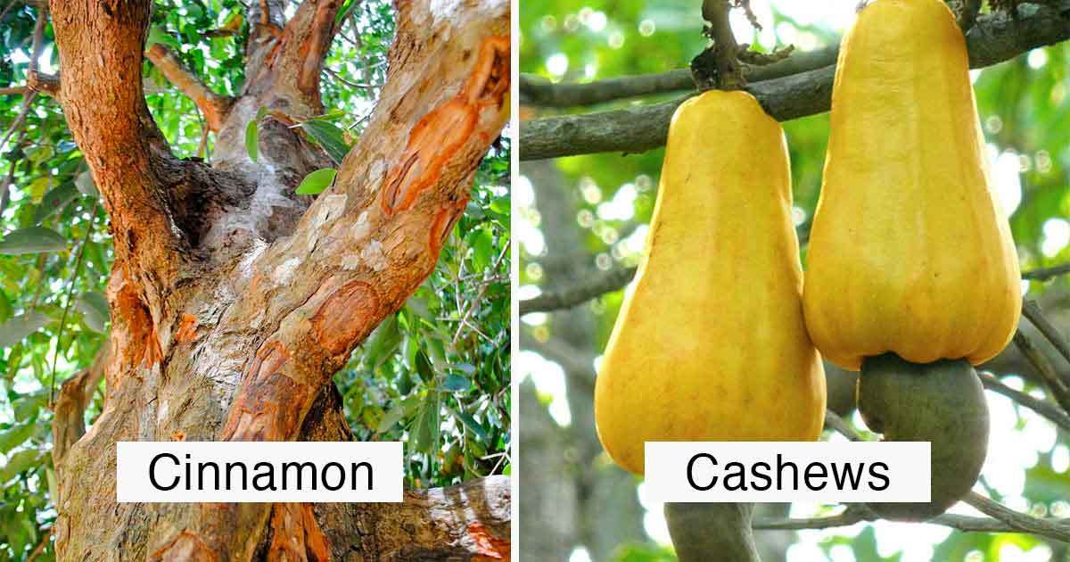 15 Photos That Show You Have No Idea How Food Is Grown