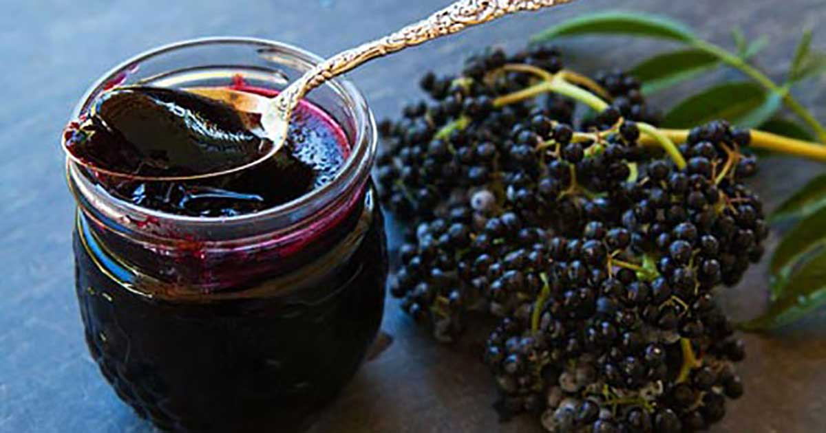 Elderberry - Natural Weapon Against Influenza