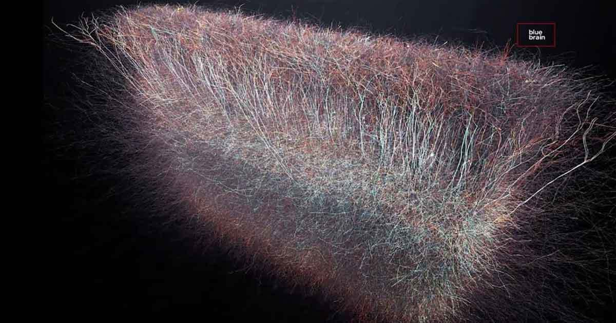 Scientists Have Discovered a Multidimensional Universe in the Human Brain