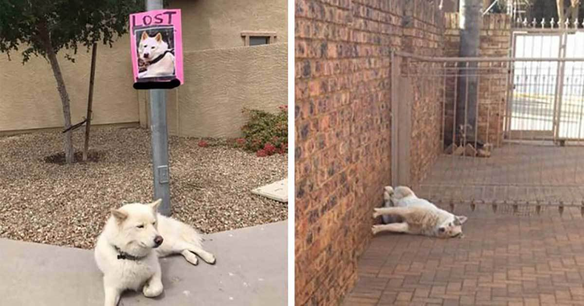 33 Funny Photos Proving Our Pets Are Complete Weirdos