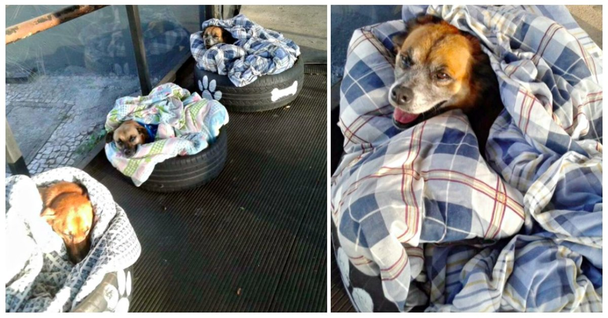 A Bus Station Did An Inspiring Act Of Kindness - New And Warm Beds For Homeless Dogs!