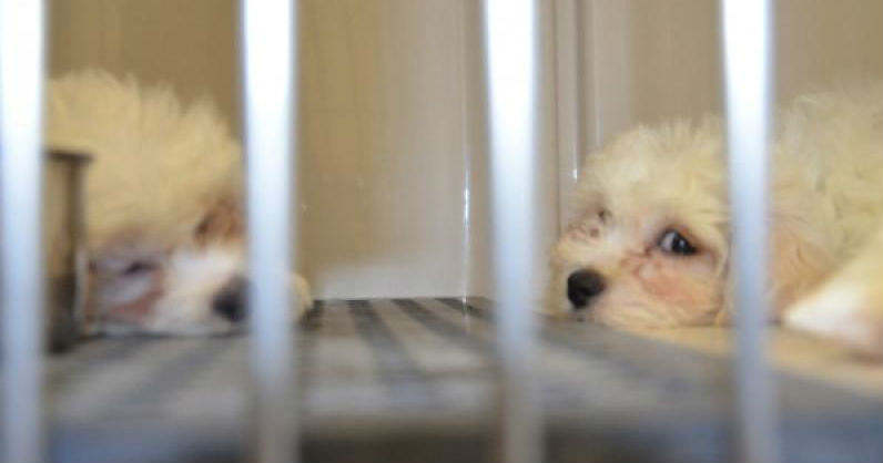 Bill To Force New Pet Stores To Sell Only Rescue Animals Passes N.J. Senate