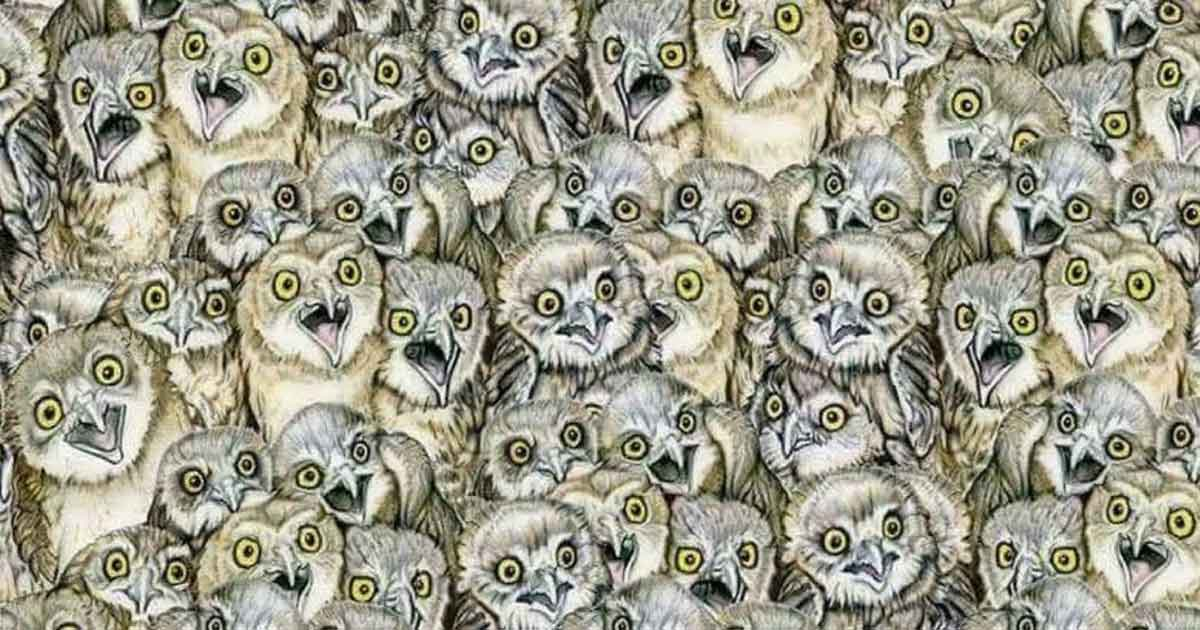 Can You Find A Cat Among These Owls It's Not As Easy As You Think