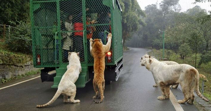 Free Animals & People In Cages - A ZOO In China Offers Great Excitement!