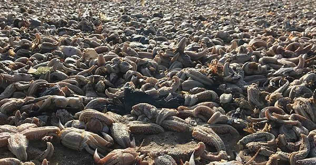 Millions of Dead Starfish Washed up at Eastern Yorkshire After a Huge Storm