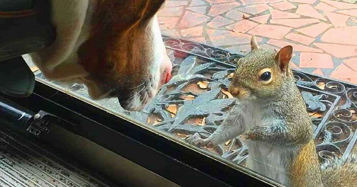 The Squirrel That Visits a Family Every Day for 8 Years Has Something Amazing to Show Them