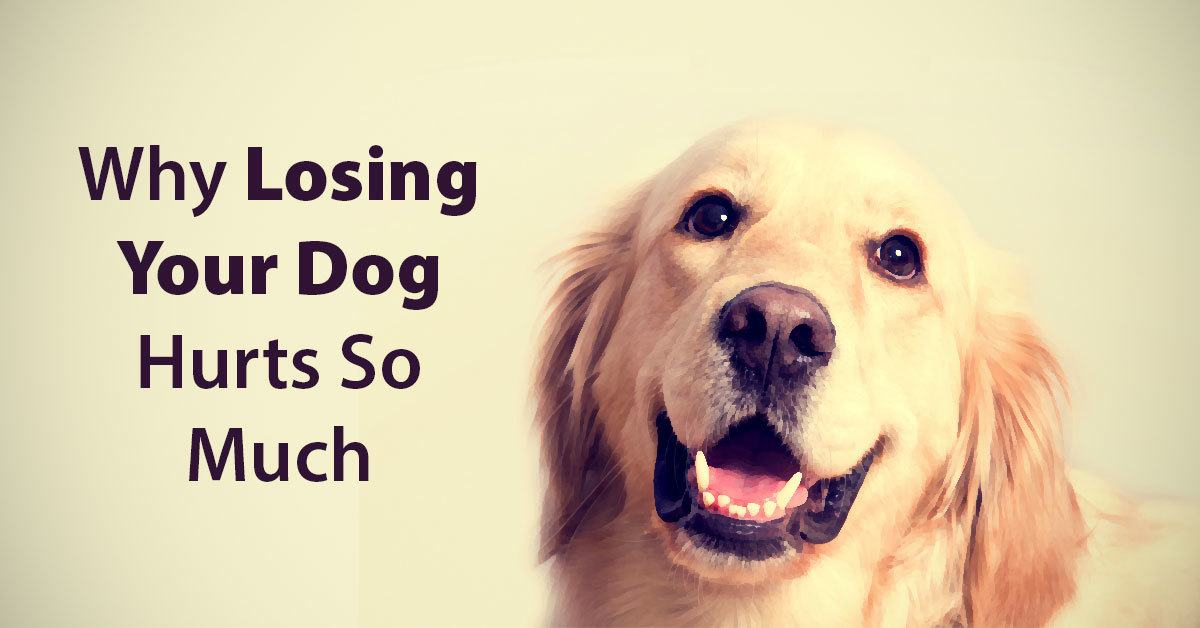 What Makes Dogs So Special & Why Losing Them Hurts So Much?