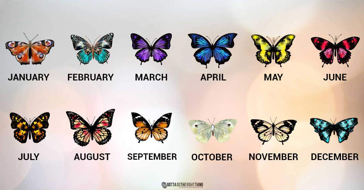 What Your Birth Month Butterfly Says About Your Personality