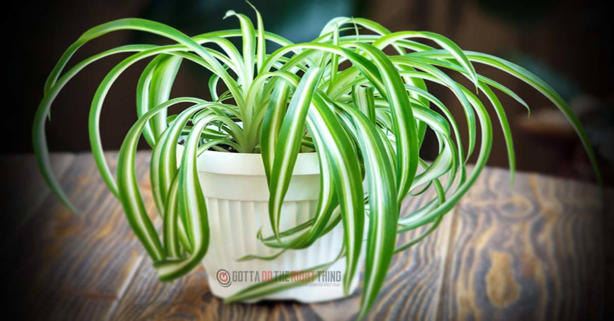 10 Plants to Keep in Your Home for Cleaner Air
