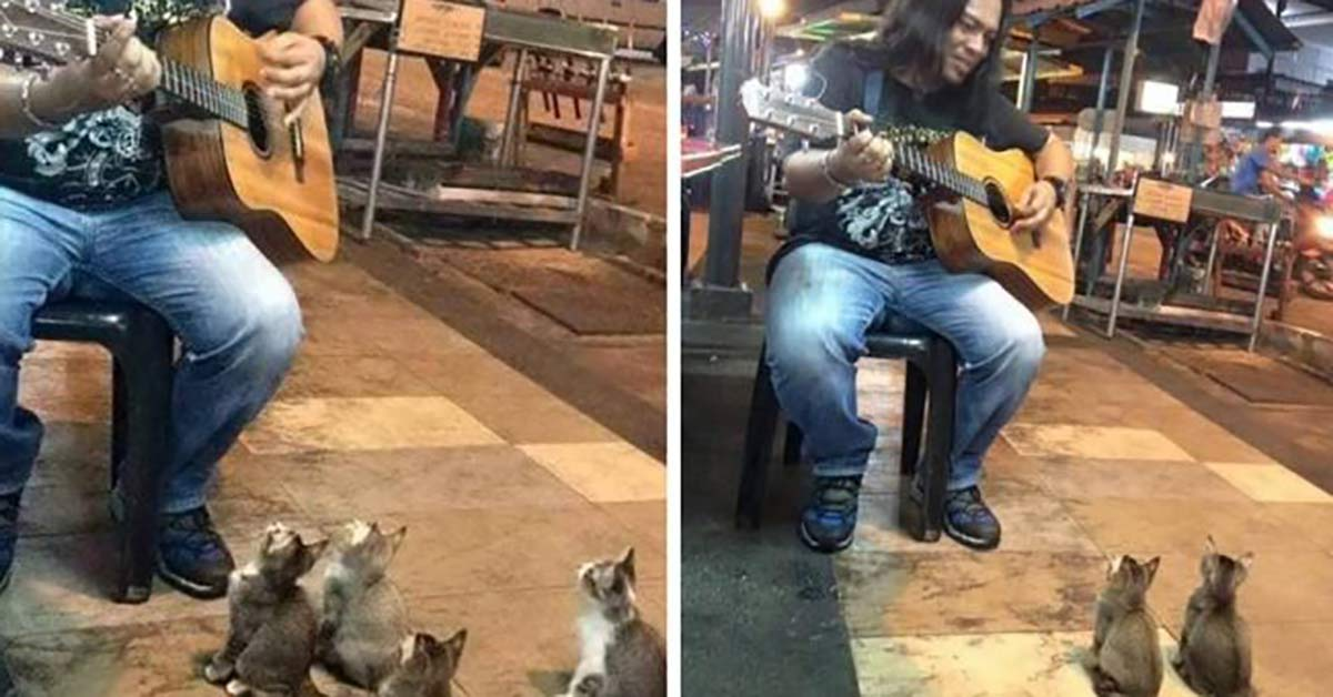 Street Performer Was Ignored, But Then 4 Kittens Came to Show Support
