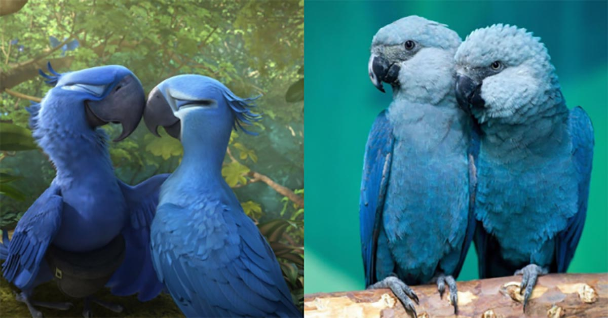 The Blue Macaw Parrot from the Film Rio Is Officially Extinct