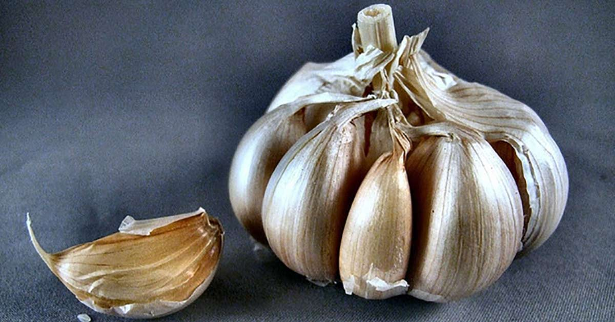 Garlic May Be 100 Times More Effective Than Common Antibiotics, Study Suggests